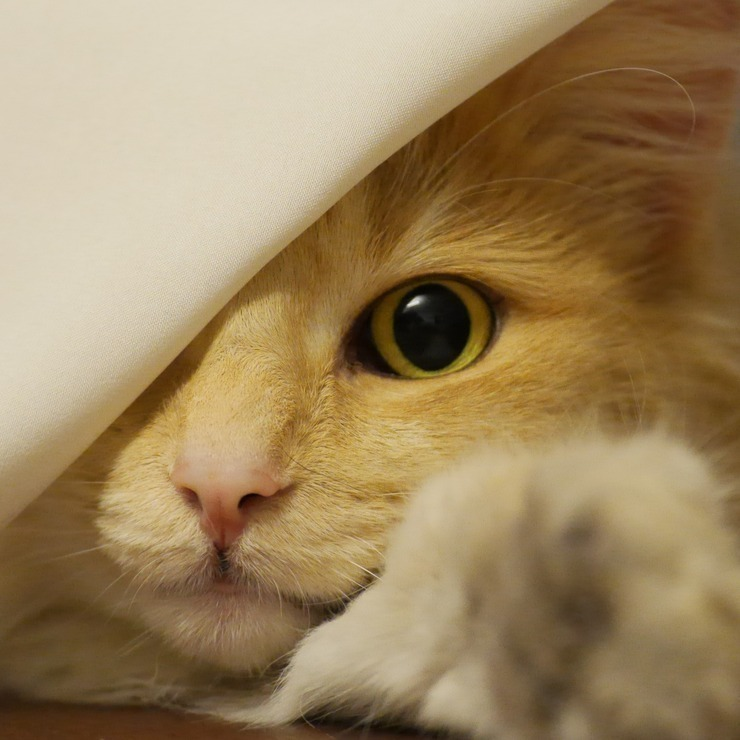 Cat peeking out